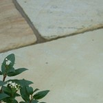 Mint Fossil Natural Sandstone